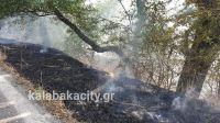 Βασιλική Καλαμπάκας: Νέα φωτιά στο δάσος το πρωί της Τετάρτης