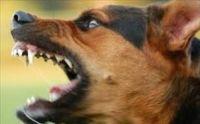 Μάνα και κόρη σε χωριό της Φαρκαδόνας δέχτηκαν την επίθεση του σκύλου τους