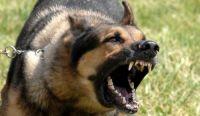 Στο Κ.Υ Καλαμπάκας γυναίκα από επίθεση αδέσποτου στο κέντρο της πόλης – Ανεξέλεγκτη η κατάσταση με τα αδέσποτα